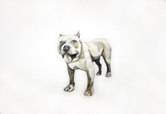 dogdays (3)