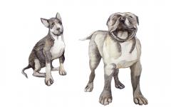 dogdays (9)