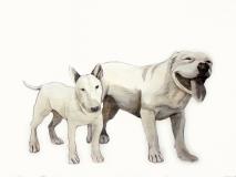 dogdays (1)
