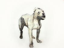 dogdays (4)