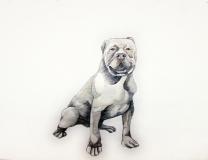 dogdays (6)