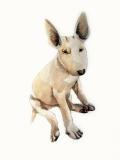 dogdays (7)